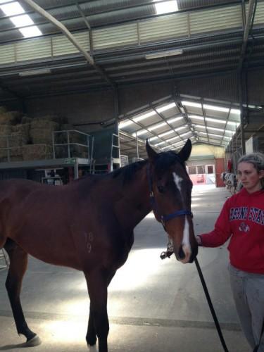 Crookhaven horse p171013